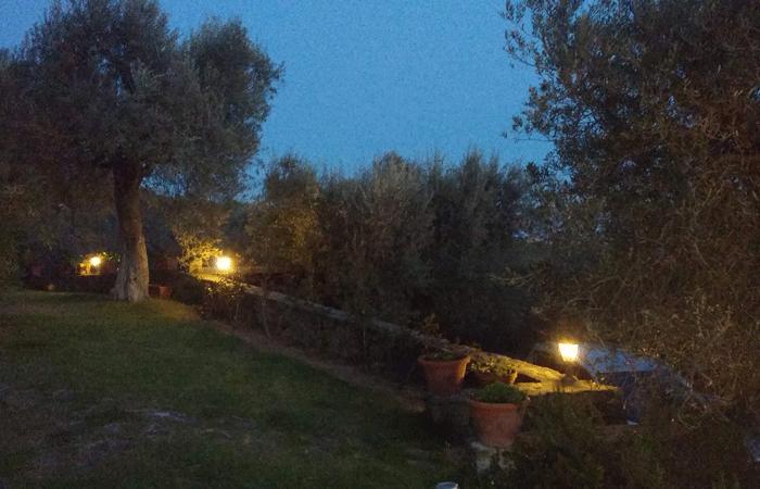 Olive Tree Suites - The garden